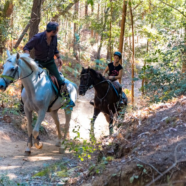 b37a416ee Trilhos Equestres de Valongo